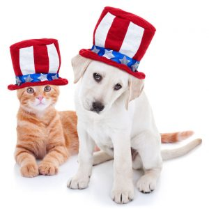 4th of July puppy and kitten no anxiety