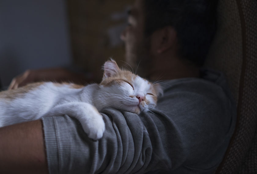 National Cat Lover's Month