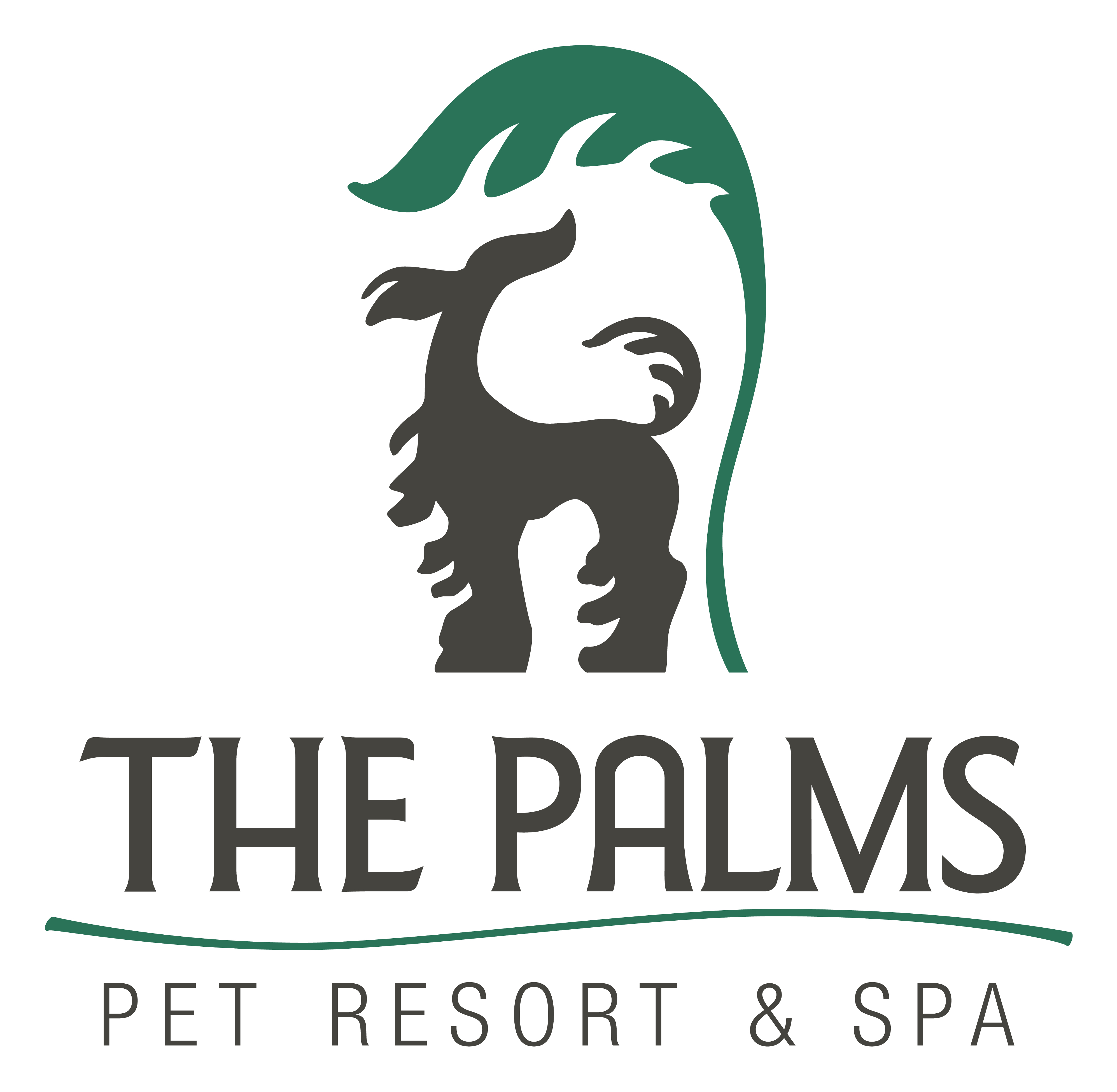 Animal Boarding & Grooming | Hill Country Animal Hospital